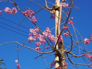 Sakura2014-02
